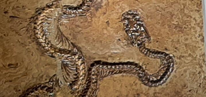 Slider-Schlangenausstellung
